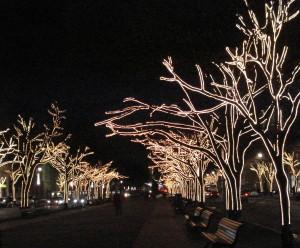 Unter den Linden. Foto: Kirsten Andersen