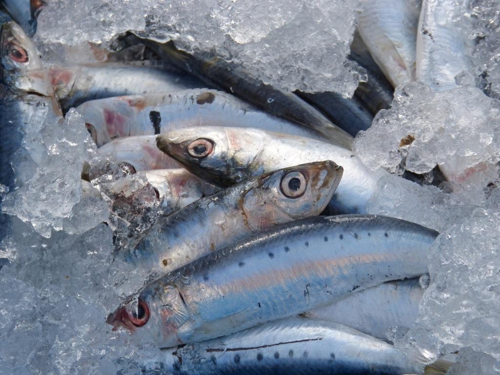 Spis fisk i Berlin